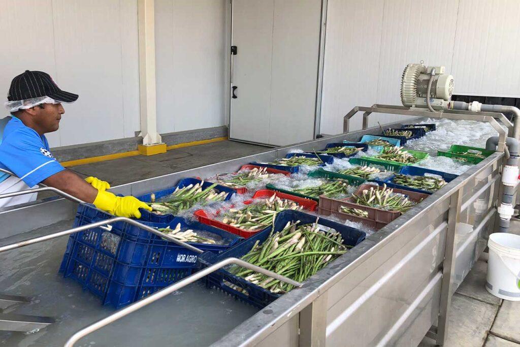 Cerca de 36,000 productores de la Agricultura Familiar mejoraron su competitividad