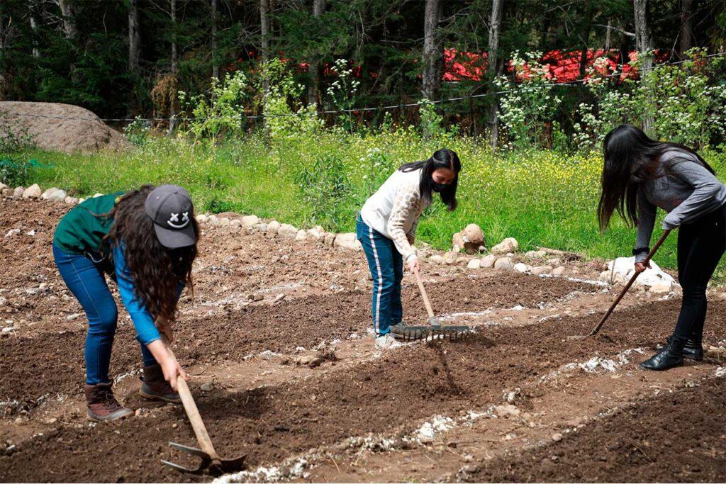 Inician siembra de verduras en camas almacigueras para huertos familiares