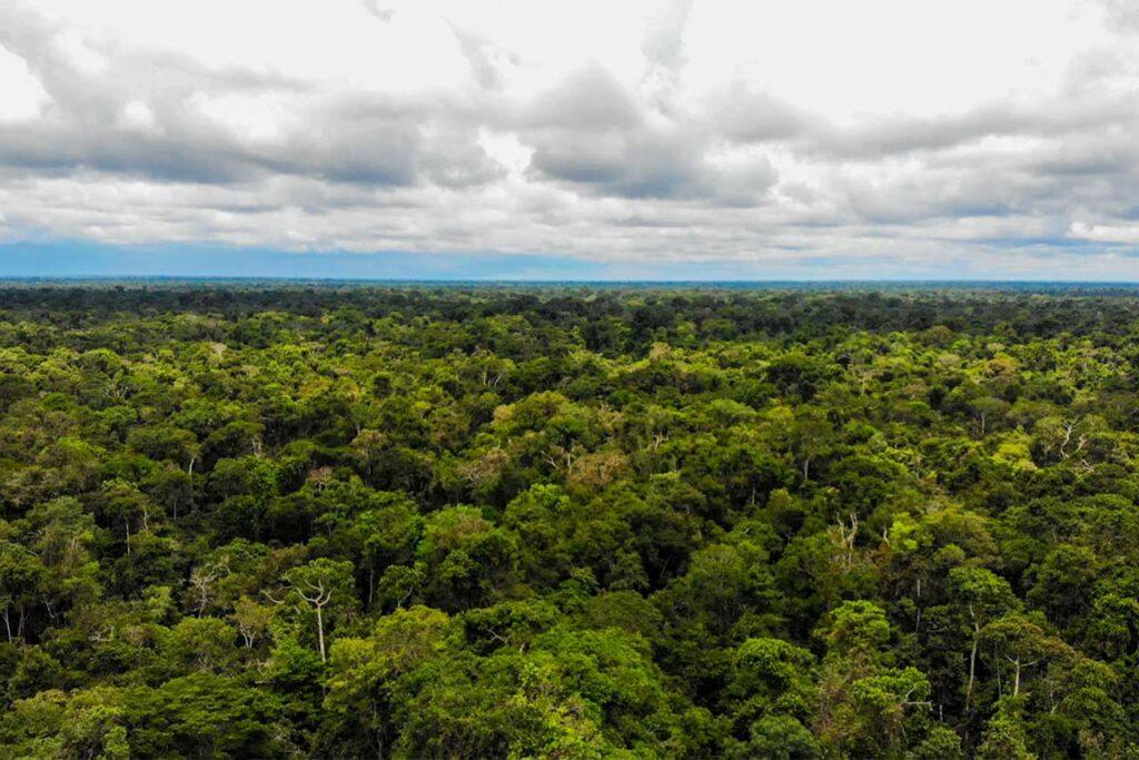 OSINFOR, fortalece el combate de delitos contra los bosques y la vida silvestre