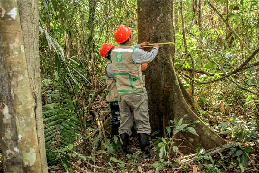 OSINFOR presenta estudio ecológico sobre distribución de especies forestales en la Amazonía peruana