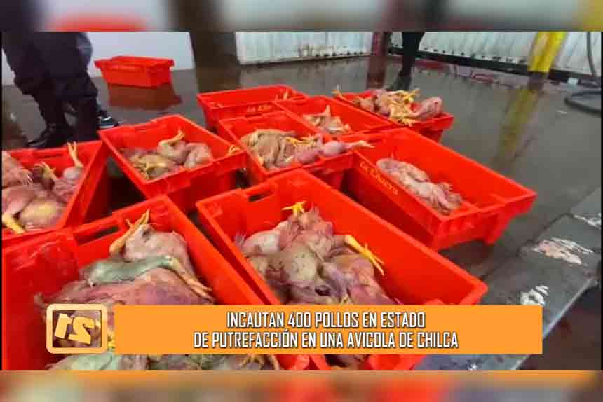 Chilca: Incautan 400 pollos en estado de putrefacción (VIDEO)